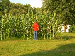 Knee High by the 4th of July?