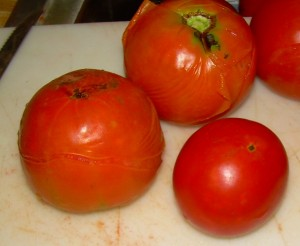 Split skin on blanched tomatoes
